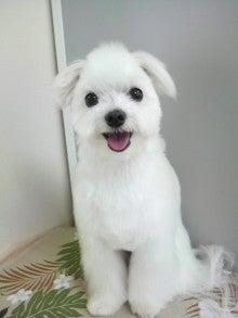 LOOP'S☆十犬十色-2011060416480000.jpg