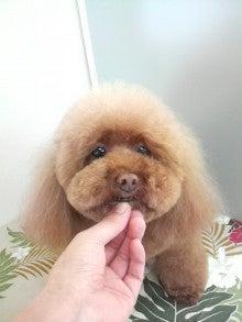 LOOP'S☆十犬十色-2011053013150000.jpg