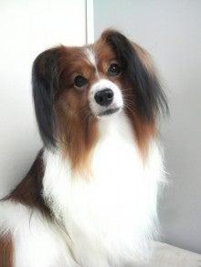 LOOP'S☆十犬十色-P1000351.jpg