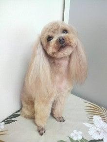 LOOP'S☆十犬十色-P1000371.jpg