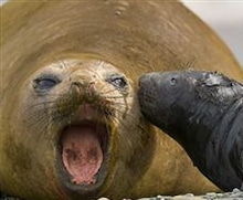 3秒で笑えるオモシロ画像ブログ