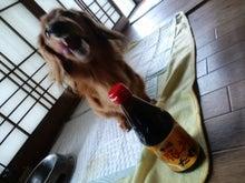 ダックス★杏ぢゅ★の奮闘記-CA3G0709.jpg