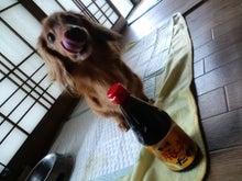 ダックス★杏ぢゅ★の奮闘記-CA3G07080001.jpg