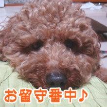 緑のある犬猫美容室「ココットベール」Blog☆ココットブログ☆-タントちゃん2