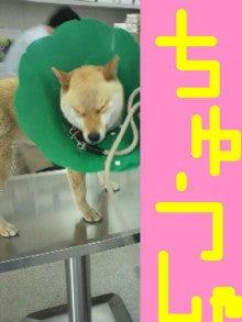 MIYUKI DAVISのProof to live!-image0018.jpg