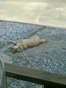 MIYUKI DAVISのProof to live!-2011050914150001.jpg