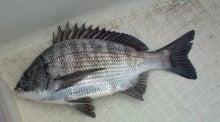 $Yoの魚釣り・旅日記