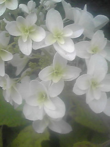 ㈲山下植物園のブログ-110610_1758~01.JPG