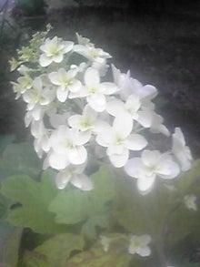 ㈲山下植物園のブログ-110610_1758~02.JPG