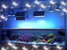 $ちびひめのブログ-我が家のサンゴ水槽