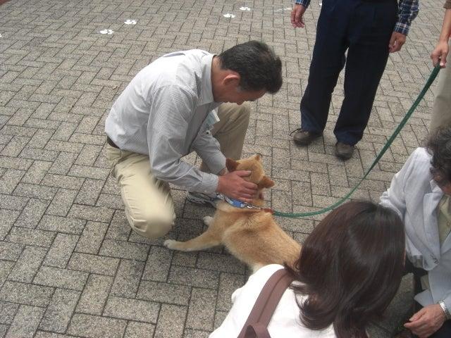長崎の保健所の命を救う会の代表のブログ 長崎県の動物愛護団体です 犬と猫の里親譲渡会を毎月開催-3か月ぶりの感動の再会。