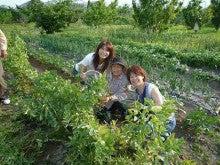 野菜&果物☆ビューティー計画♪mari