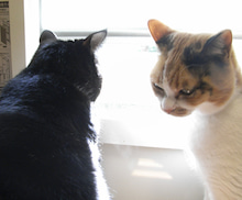 猫々な日々