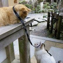 お寺の猫たち、元気で…