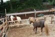 馬を愛する男のブログ Ebosikogen Horse Park-お見合い1