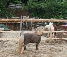 馬を愛する男のブログ Ebosikogen Horse Park-お見合い3