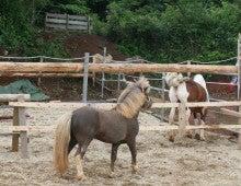 馬を愛する男のブログ Ebosikogen Horse Park-お見合い2