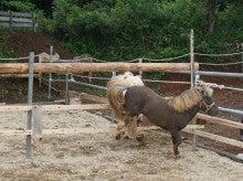 馬を愛する男のブログ Ebosikogen Horse Park-お見合い4