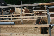 馬を愛する男のブログ Ebosikogen Horse Park-2回目