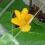 青葉台小で花が咲いた…