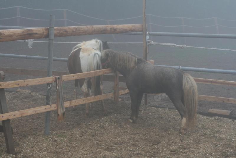 馬を愛する男のブログ Ebosikogen Horse Park-仲良し