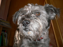 $犬小屋ブログ「ばか犬と私」
