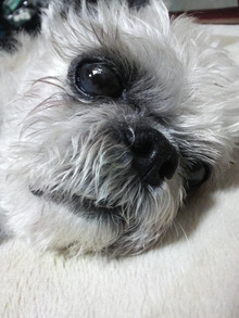 LOOP'S☆十犬十色-2011061820340000.jpg