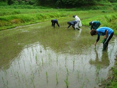 京都で自然な農を提案!農業体験も実施! しましま畑でつかまえて-ひえとり皆
