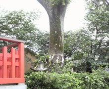 いつの日も神社、時々たこ焼き。-2011061913120000.jpg