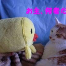たーちゃんとピヨ介