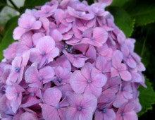 Rose Garden(ローズガーデン)代表 高智子 ブログ