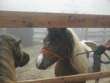 馬を愛する男のブログ Ebosikogen Horse Park-目がハートマーク