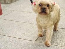 $日本動物虐待防止協会のブログ
