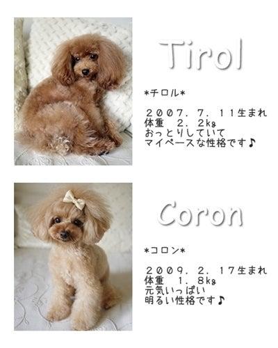 $*Tirol&Coron*