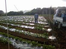 安藤農園栽培日記+おじーちゃんの畑の観察日記