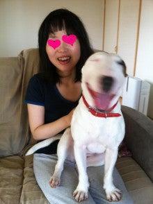 ミニチュアブルテリア天さんの犬的日記-20110625おおはしゃぎ