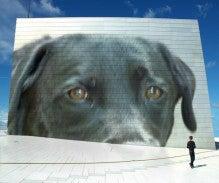 (犬)★黒ラブと未羽の動物な生活★(犬)