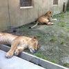 動物園の画像
