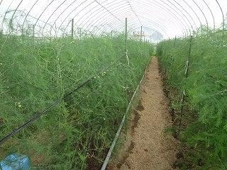 2人と1匹?田舎で農業します!!