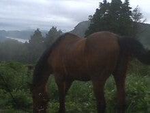 馬を愛する男のブログ Ebosikogen Horse Park-雨の切れ間のユキの散歩