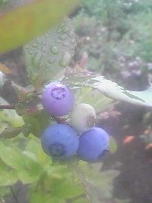 ㈲山下植物園のブログ-110617_0900~01.JPG