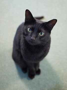 猫の里親募集情報 :: ペットのおうち【月間利用 …
