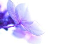 unchenged.-flower