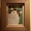 『雑巾猫万歳展』本日よりスタートの画像