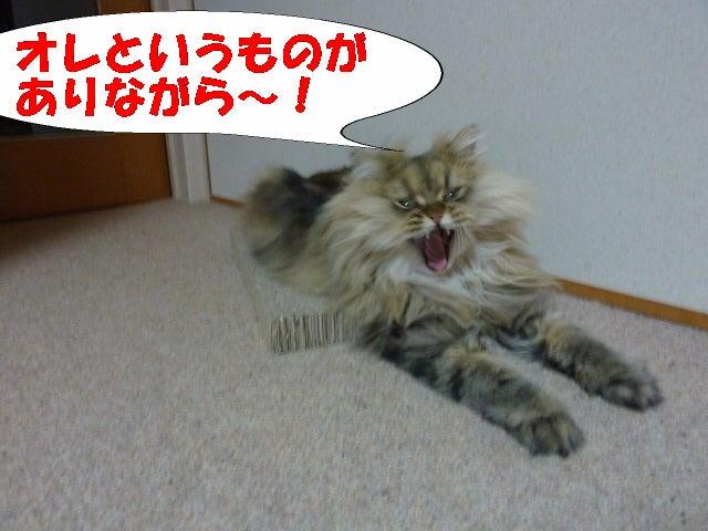 『ワンニャン狂想曲♪』
