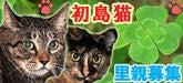 $雨の降らない国-初島の猫里親募集