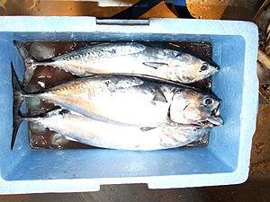手漕ぎボート釣り&食べる話