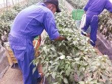 農業人材を育てるHMカンパニーの日々成長日記