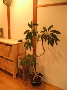 不動産エージェンシー~SOHO社長の営業日記                     東大阪での住まい探しをおてつだい