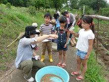 かもの子農園でボランティアしよう♪-小麦うちわ1年生